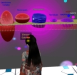 Second Life Biology