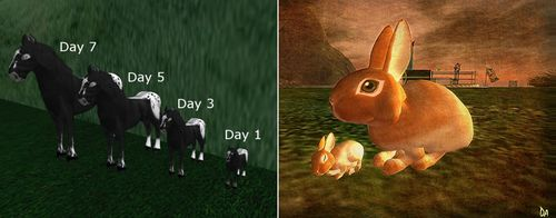 Amaretto Horses Ozimal Bunnies Second Life