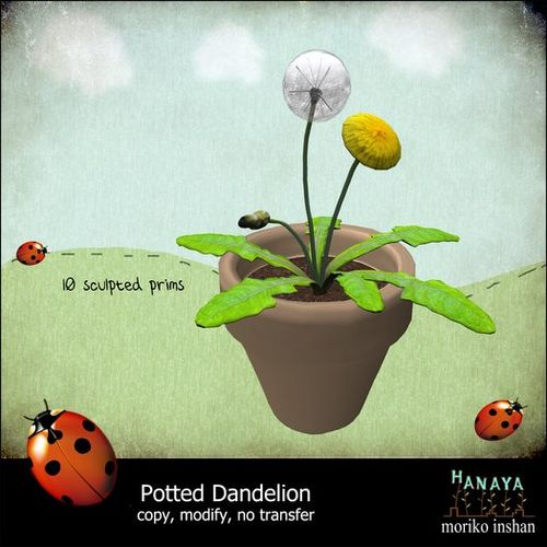 -Hanaya- Potted Dandylion New
