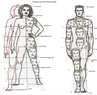 Avatar Human Proportions Guide