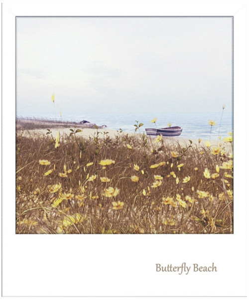 Butterfly Beach by Sare SL Photo